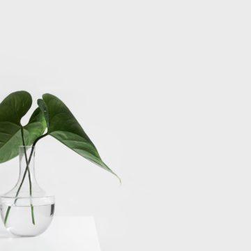 7 motivi per cui uno stile di vita minimalista ti rende più sana (e felice)
