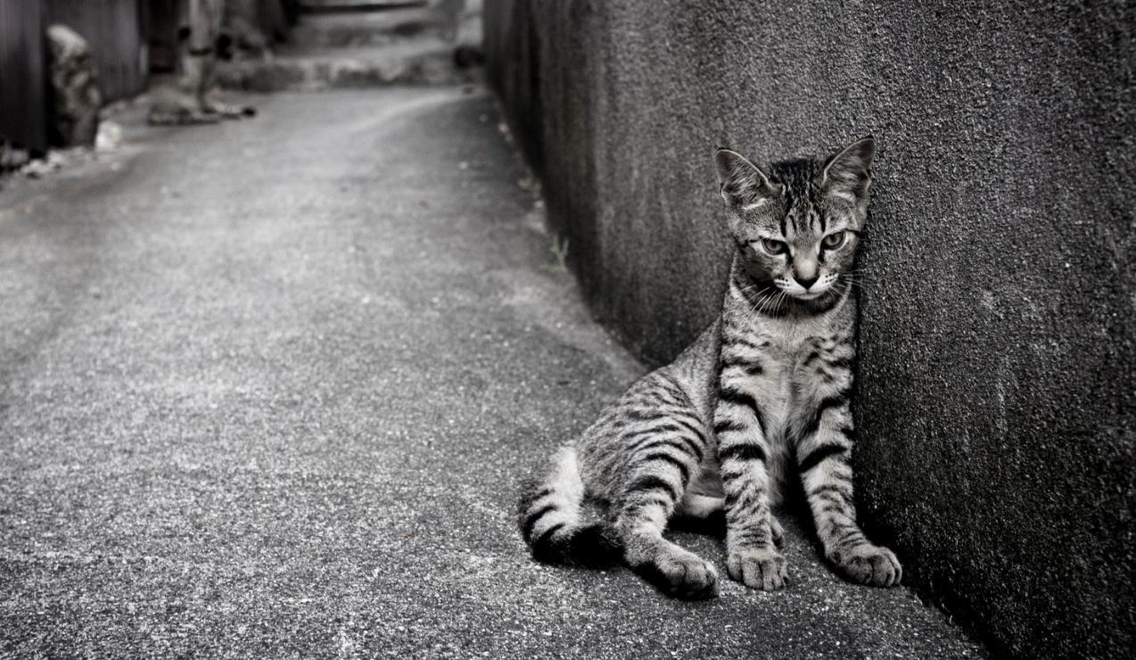 solitudine gatto