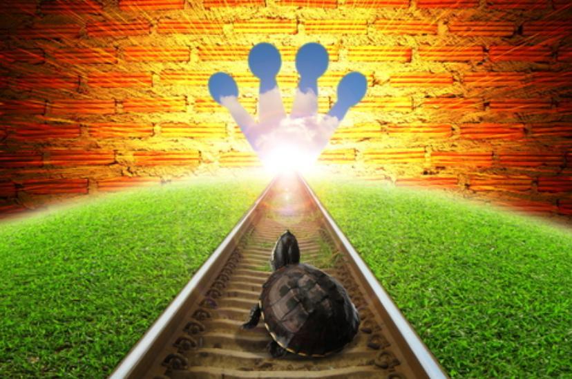 turtle success j